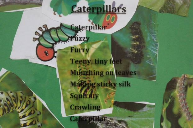 Caterpillar Poetry