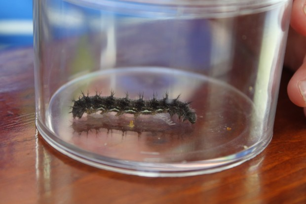 Caterpillar Songs and Poems