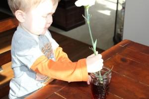rainbow carnations 4