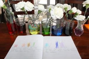 rainbow carnations 8