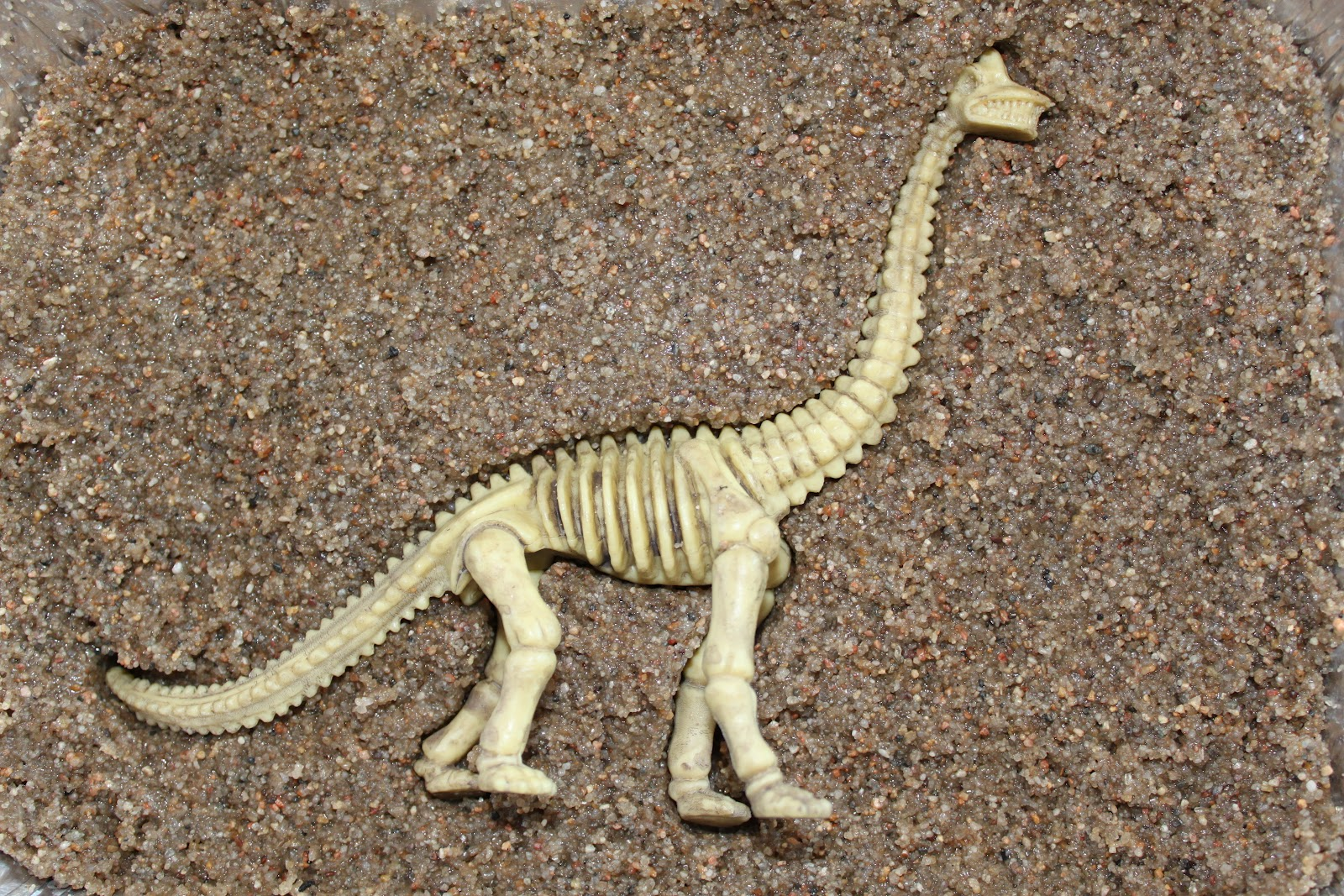 Make Fossils In The Classroom